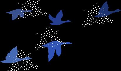 2016_PINASUUTITSAQ_illustrations_v2-OISEAUX02